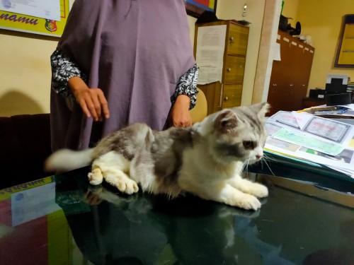 Salah satu kucing hasil curian yang disita sebagai barang bukti