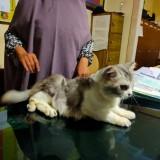 Bobol Penangkaran Kucing Hias, Remaja Ini Diringkus Polisi