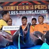 Jual 9 Lumba-Lumba, Nelayan Asal Sine Ditangkap Polisi
