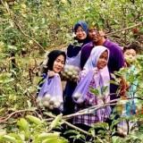 Pelaku Usaha Wisata Petik Apel di Kota Batu Menjerit Lagi, Usai Tangani Busuk Buah Disusul Corona