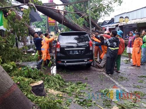 Hujan Deras Disertai angin, Pohon Tumbang Timpa Mobil