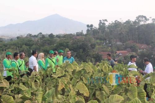 Jaga Kemurnian Tembakau Selopuro, Petani Blitar Minta Pengrajang dan Pengepul Diberi Sosialisasi