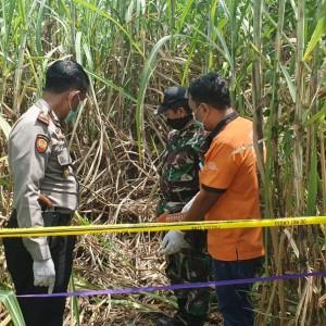 Kerangka Manusia Ditemukan Warga Jombang di Tengah Ladang Tebu