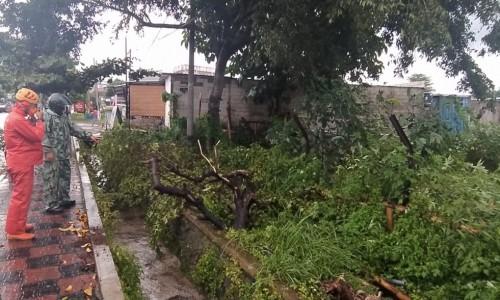 Sehari 3 Bencana Melanda Kota Batu Akibat Hujan Disertai Angin Kencang