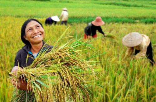 Akademisi Sarankan Pemerintah Beli Hasil Panen Petani di Tengah Pandemi Covid-19