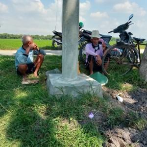 Petani di Kabupaten Madiun Kewalahan Hadapi Serangan Hama Tikus