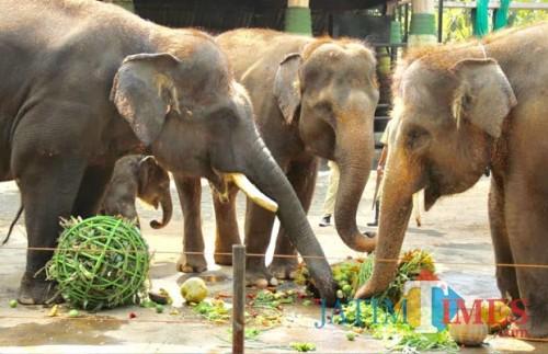 Selama Pandemi Covid-19 Satwa Batu Secret Zoo Justru Lebih Terkontrol Stressnya