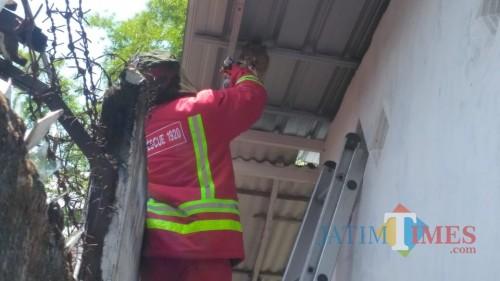 Petugas PMK Kabupaten Malang saat berupaya mengevakuasi sarang tawon jenis Vespa Affinis (Foto : PPBK Kabupaten Malang for MalangTIMES)