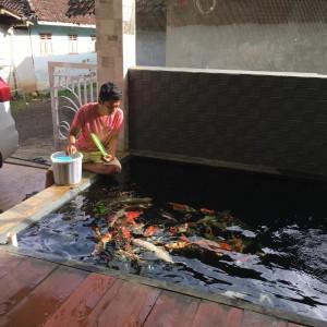 Dari Hobi Pelihara Koi, Mahasiswa Unikama Ini Sebulan Raup Untung Bersih Rp 5 Juta