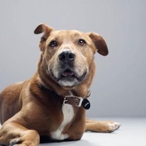 Benarkah Anjing Bisa Endus Bau Virus Covid-19? Ini Penjelasan Ahli Riset Finlandia