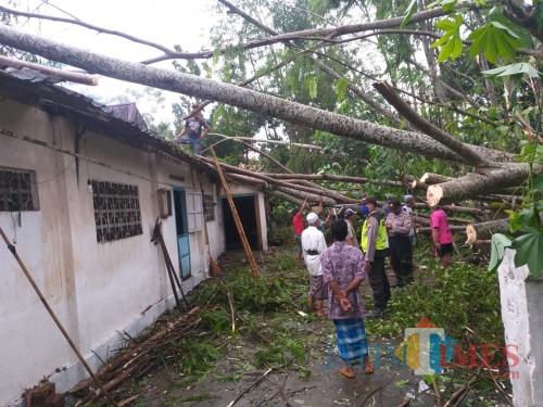 Pohon-pohon bertumbangan akibat angin kencang merusak rumah di Kec Udanawu