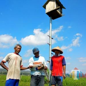 Basmi Hama Tikus di Area Pertanian, Warga Sumberjati Blitar Manfaatkan Burung Hantu