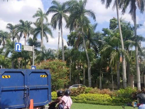 Pohon palm raja di Jalan Ijen terlihat sudah ada yang gundul. (Hendra Saputra)