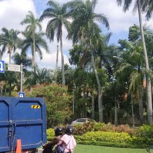 Ikon sejak Zaman Belanda, DLH Kota Malang Ganti Palm Raja yang Rusak