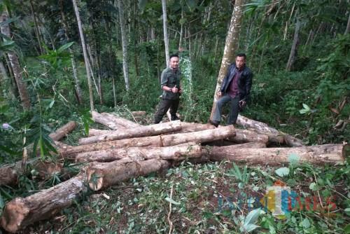 Polisi mengamankan kayu jati yang dicuri sebagai barang bukti.(Foto : Aunur Rofiq/BlitarTIMES)