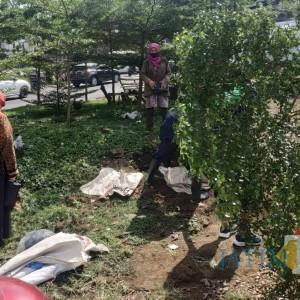 DLH Kota Malang Keluhkan Ulah Usil Warga Cabut Pohon yang Ditanam