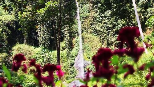 Segera Hadir Coban Sadang Alas Pujon! Menikmati Air Terjun Sambil Nongkrong di Kafe Pohon