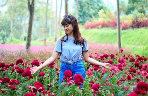 Hamparan bunga di Coban Sadang Alam Pujon. (Foto: YOGI IR /MalangTIMES)