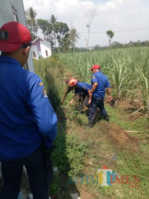 Petugas saat berupaya mengevakuasi ular berbisa yang masuk ke pemukiman warga (Foto : PPK Kabupaten Malang for MalangTIMES)