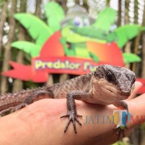 Predator Fun Park Mulai Buka, Kunjungan Wisatawan Lumayan
