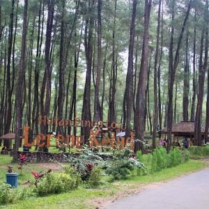 Hutan Pinus Loji, Destinasi Piknik Asyik di Lereng Kelud Blitar