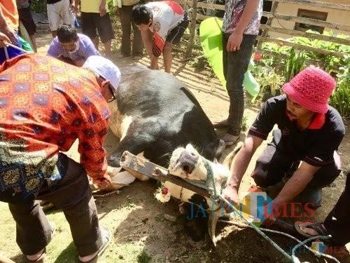Penyembelihan hewan kurban di Desa Gunungsari tahun lalu (Foto: Irsya Richa/ MalangTIMES)