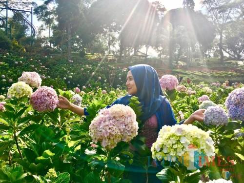 Salah satu pengunjung saat berswafoto di antara bunga di Taman Rekreasi Selecta. (Foto: Irsya Richa/MalangTIMES)