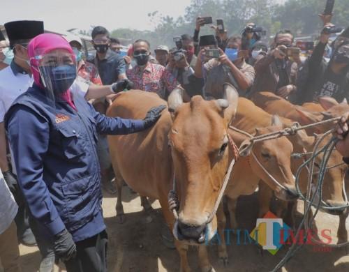 Gubernur Jatim Khofifah ketika di pasar hewan Tanah Merah
