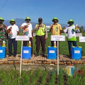 Dinas Pertanian Bondowoso Tingkatkan Produksi Pertanian Melalui Pupuk Berimbang