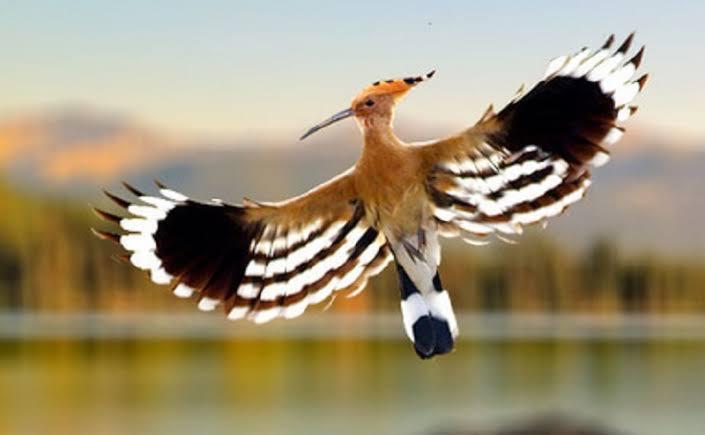 Disebutkan Dalam Al Qur An Ini Burung Yang Haram Dibunuh Manusia Jatim Times