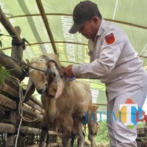 Batasi 100 Pendaftar, Pemotongan Hewan Kurban Gratis di RPH Kota Batu Sudah 40 Pendaftar