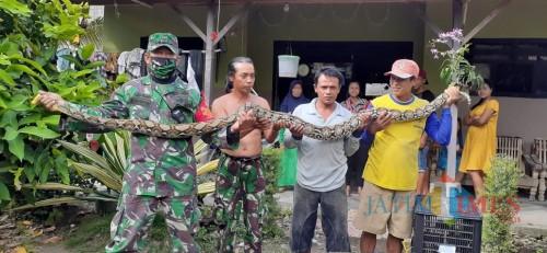 Sertu  Hadi Sukowiyono  menangkap ular piton