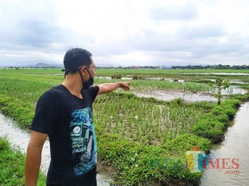 Tak Pernah Nikmati Panen, Puluhan Petani Pemilik Sawah Cekungan di Balerejo Minta Solusi