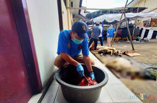 Dokter hewan UB yang mengecek organ hati sapi yang telah disembelih di Polresta Malang Kota (Anggara Sudiongko/MalangTIMES)