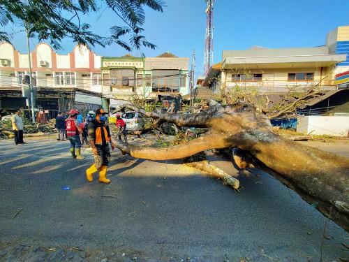 Kondisi Pohon tumbang yang melintang di tengah jalan BS Riadi (Anggara Sudiongko/MalangTIMES)