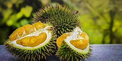 Bikin Gemas tapi Jangan Dipeluk! Lucunya Kulit Durian Saat Dirangkai Jadi Boneka Tupai