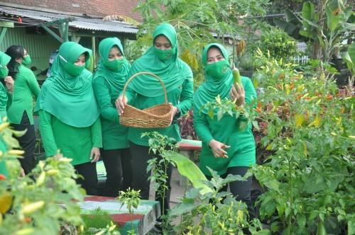 Erna Sumanto Ketua Persit KCK Cab XXIII Menarmed 1 Divif 2 PG Kostrad, saat melakukan panen sayuran hasil urban Farming (Ist)