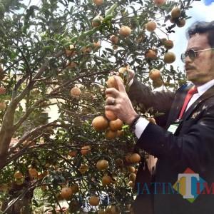 Menteri Pertanian Syahrul Yasin Menikmati Jeruk Keprok 55, Ajak Warga Makan Jeruk