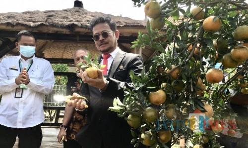 MenteriPertanian Syahrul Yasin Limpo saat memetik jeruk diBalitjestro,Jumat (14/8/2020). (Foto: Irsya Richa/MalanhTIMES)