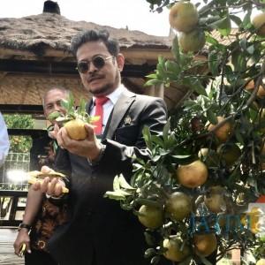 Menteri Pertanian Ingin Punya Kebun Jeruk di Kota Batu, Incar Lahan 1 Hektare