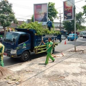 Cegah Kejadian Pohon Tumbang, DLH Rutin Lakukan Patroli Pemantauan Pohon Kota