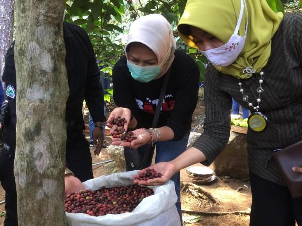 Wali Kota Batu Dewanti Rumpoko saat mencium aroma kopi Songgoriti di Kebun Kopi Ceret Ireng, Sabtu (29/8/2020). (Foto: Irsya Richa/MalangTIMES)