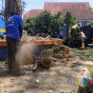 Petakan Pohon Rawan Tumbang, DLH Kota Malang Terjunkan Poltam