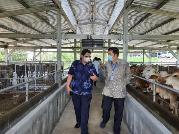 Kepala Kantor Wilayah (Kanwil) VII BCA Rudy Kurniawan (kanan) saat meninjau UMKM peternak sapi di Ngajum, Kabupaten Malang. (istimewa)