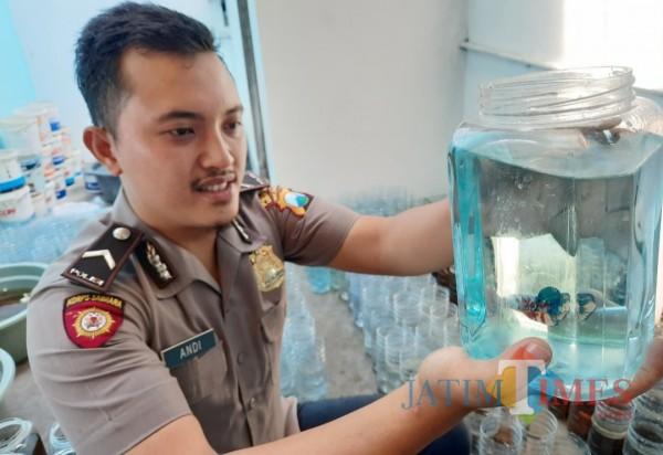Dari Hobi Ikan Cupang, Polisi di Kediri Untung Jutaan Rupiah Sebulan Hingga Kirim ke Malaysia