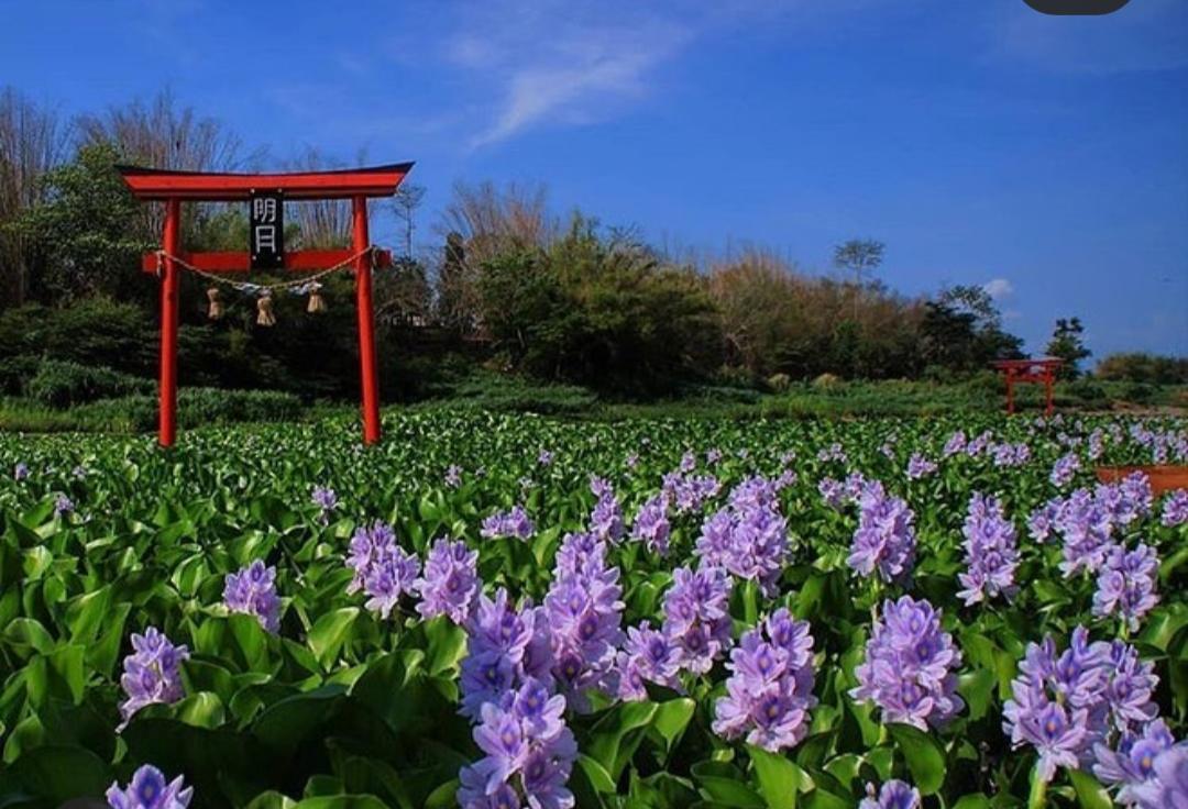 Buka Kembali Wisata Ala Jepang Di Yogyakarta Kalinampu Natural Park Jatim Times