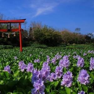 "Buka Kembali, Wisata ala Jepang di Yogyakarta ""Kalinampu Natural Park"""