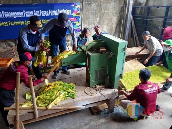 Para petani bersemangat mengikuti praktik pasca-panen yang digelar Dinas Pertanian dan Pangan Kabupaten Blitar.(Foto : Aunur Rofiq/BlitarTIMES)