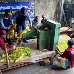 Praktik Pasca-Panen Tembakau, Dinas Pertanian Pemkab Blitar Dorong Petani Inovasi Teknologi