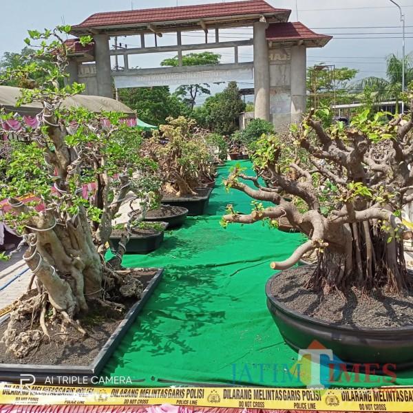 Ratusan Pohon Kerdil Ikuti Kejuaraan Bonsai PPBI Ngawi